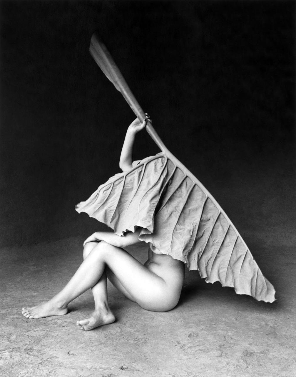 Hoja elegante (Elegantiškas lapas), Meksikas, 1998